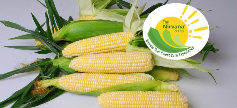 The Nirvana Series Sweet Corn Crookham Company