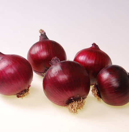 Crookham Onion Red Ranger